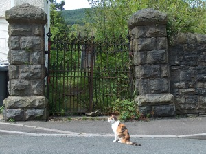 A sorry scene, even for cats, in 2009